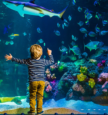 SEA LIFE & Ostsee Therme